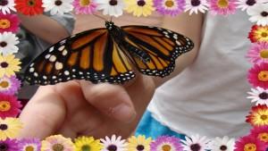 Krohn Conservatory ~ Butterflies of Brazil