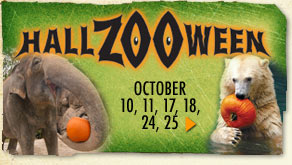 Final Weekend for HallZOOween