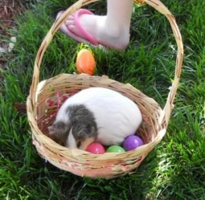 EasterPrincessCookie