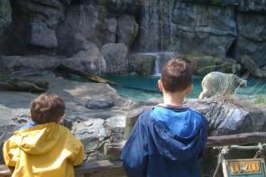 Take a walk on the wild side with The Cincinnati Zoo's WILD PACKS
