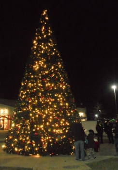 DeerfieldTreeLighting