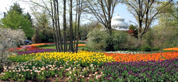 Celebrate the beginning of spring with the opening of Zoo Blooms at the Cincinnati Zoo starting Tuesday, April 1 (open daily through April 30).