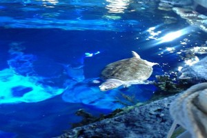 Newport Aquarium Winter Family Days