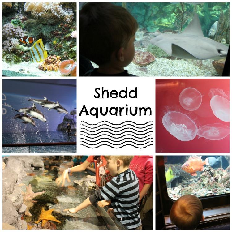 Shedd Aquarium Collage