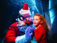 Newport_Aquarium_Scuba_Santa_Ad_CMYK_HR_-2015_Steve_Ziegelmeyer--6035