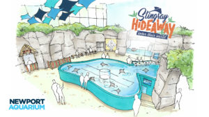New Stingray Experience Coming to Newport Aquarium
