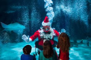 Newport Aquarium Hosts Scuba Santa's Water Wonderland