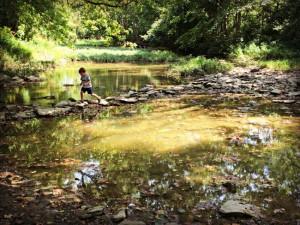 Wolsing Trails Henry Creek