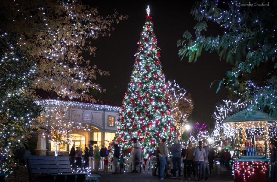 Pnc Festival Of Lights Returns To Cincinnati Zoo Family