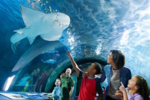 #SharkSummer Begins at Newport Aquarium— One kid free with full-priced adult ticket, and new baby sharks join Shark Central